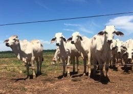 Agri-Tech visit Paraguay