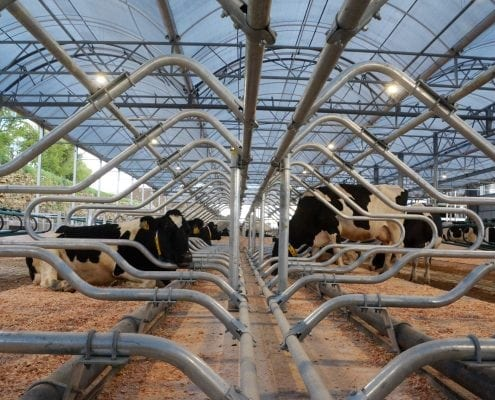 SWDC cows in K38 250418 - South West Dairy Development Centre Somerset